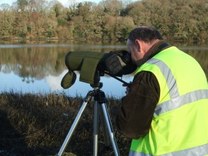 Ecofact wintering bird surveys