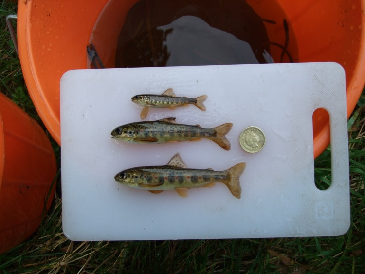 We also work in Northern Ireland and regularly hold electrofishing permits issued by the Lough's A