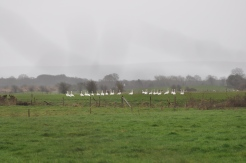 Wintering Bird Surveys (8)