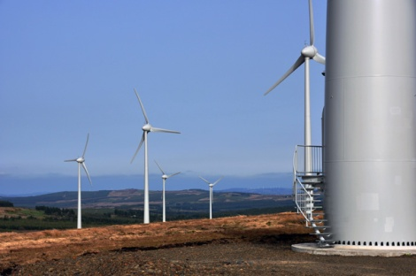We are experts in wind energy ecology