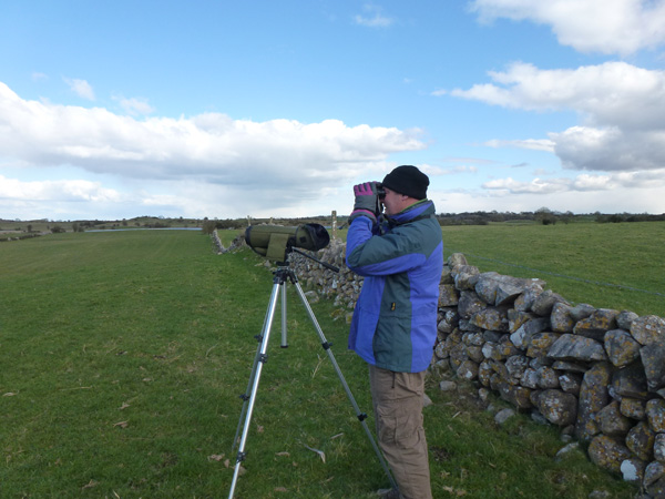 Bird Survey Ireland (2)