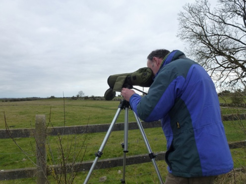 Winter bird surveys