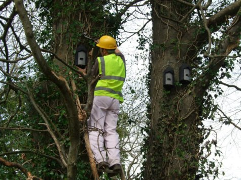 Bat Survey Bat Boxes