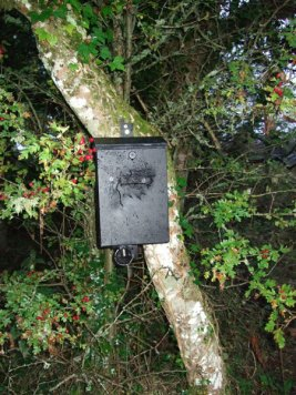 Bat Survey - BatSurveysIreland.com