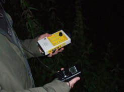 Bat Surveys Ireland
