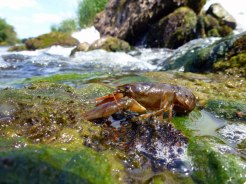ECOFACT | Aquatic Ecology Experts