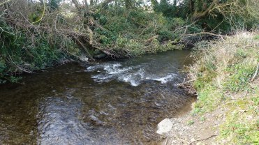 The stream where the lampreys were found