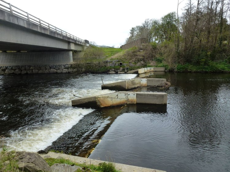 Inland Fisheries Ireland crump weir fish counter on the River Maine blocks access for river lampreys, brook lampreys and eels.