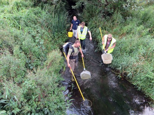 Water quality, fisheries and aquatic ecology survey