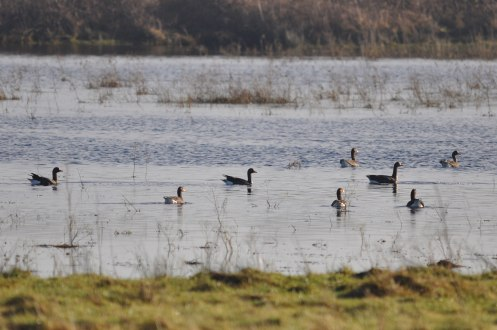 Winter bird surveys (20)