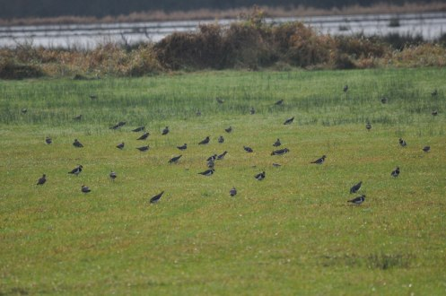 Winter bird surveys (32)