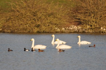 Winter bird surveys (33)