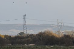 Power line and birds