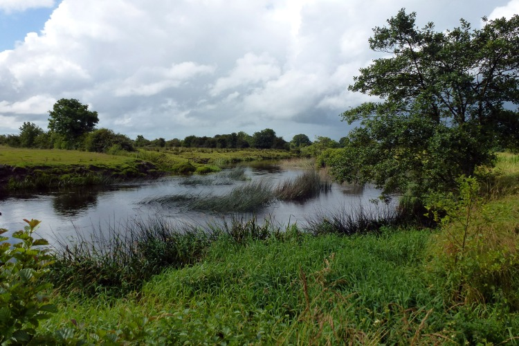 This stretch of the River Clare downstream of the Sinking River confluence has recovered from arterial drainage. Unfortunately the OPW would consider that this was due for drainage maintenance.