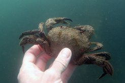 Marine ecology survey (23)